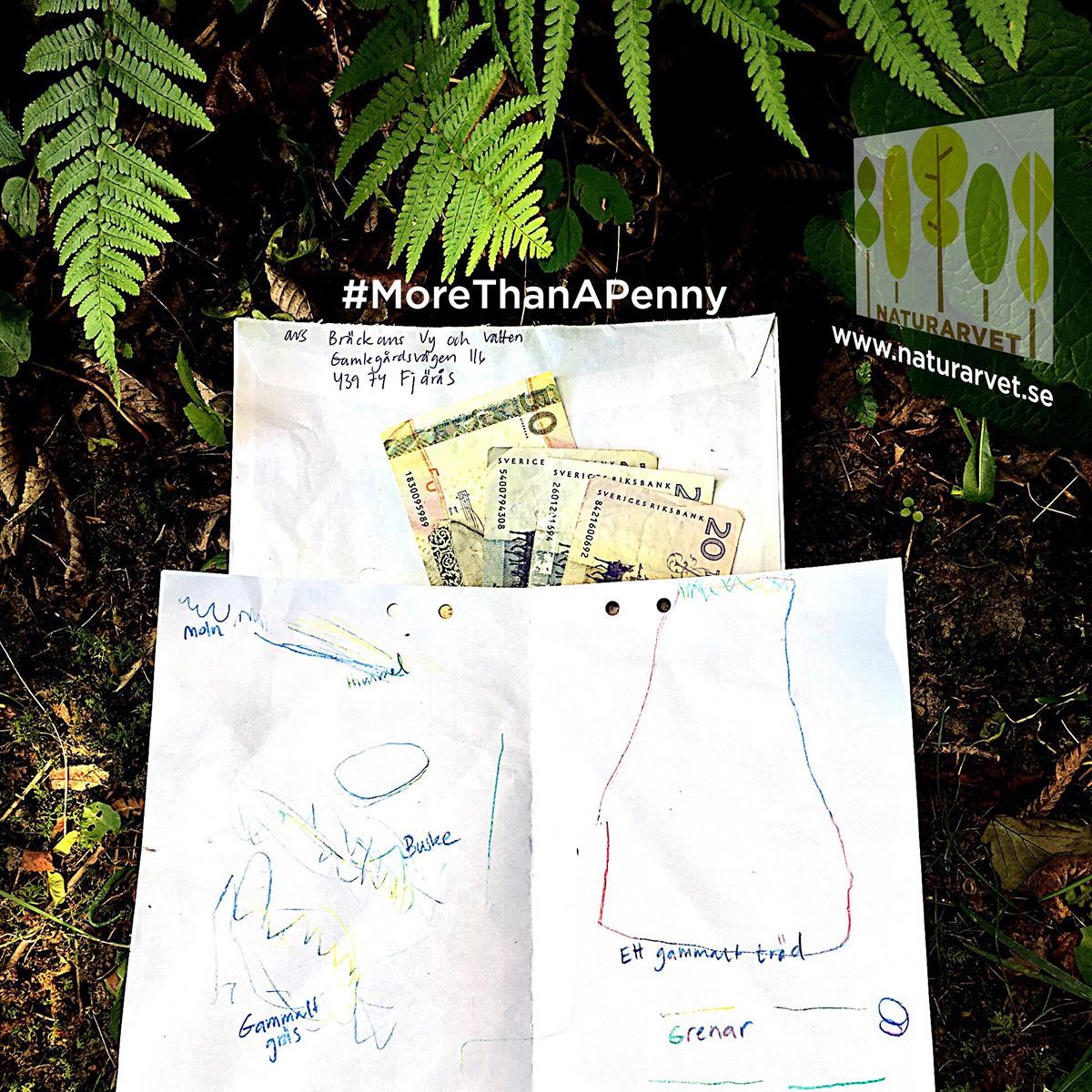 100 kronor ger evigt skydd för 10 kvm gammelskog