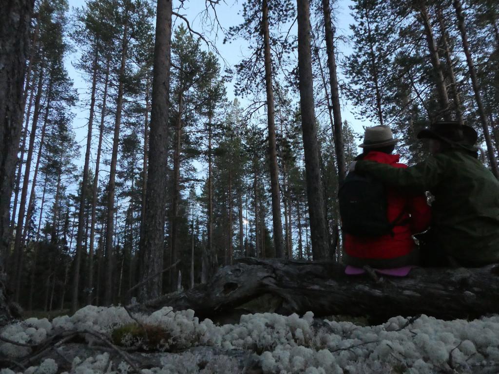 Fjällnära naturskogsartad tallhedskog - värt att bevara!