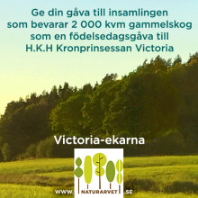 Victoria_ekarna_instagram