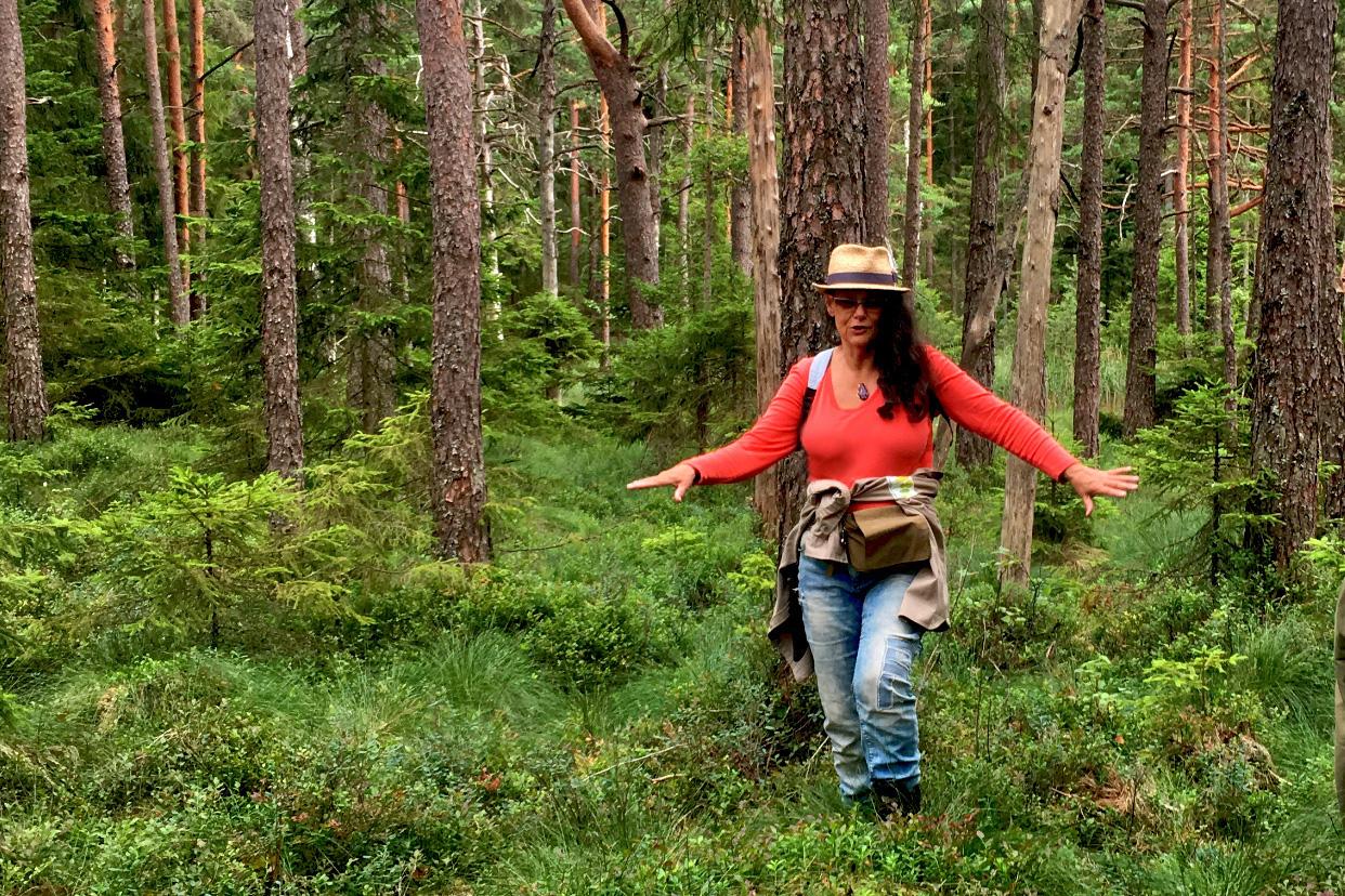 Naturarvet skyddar gammelskog