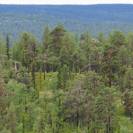 Ännamus-Wald