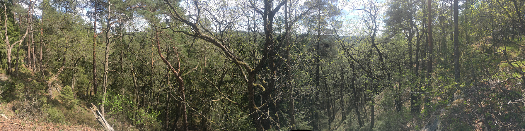Skarnhålans gammelskog