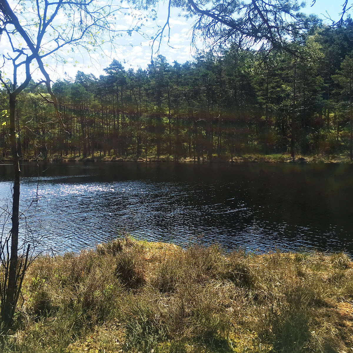 Stora Skarnhålan - agkärr i Risveden
