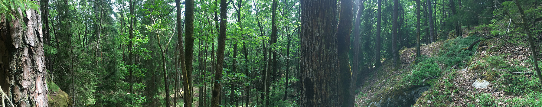 Do You Want To Help Preserve Old Growth Forest
