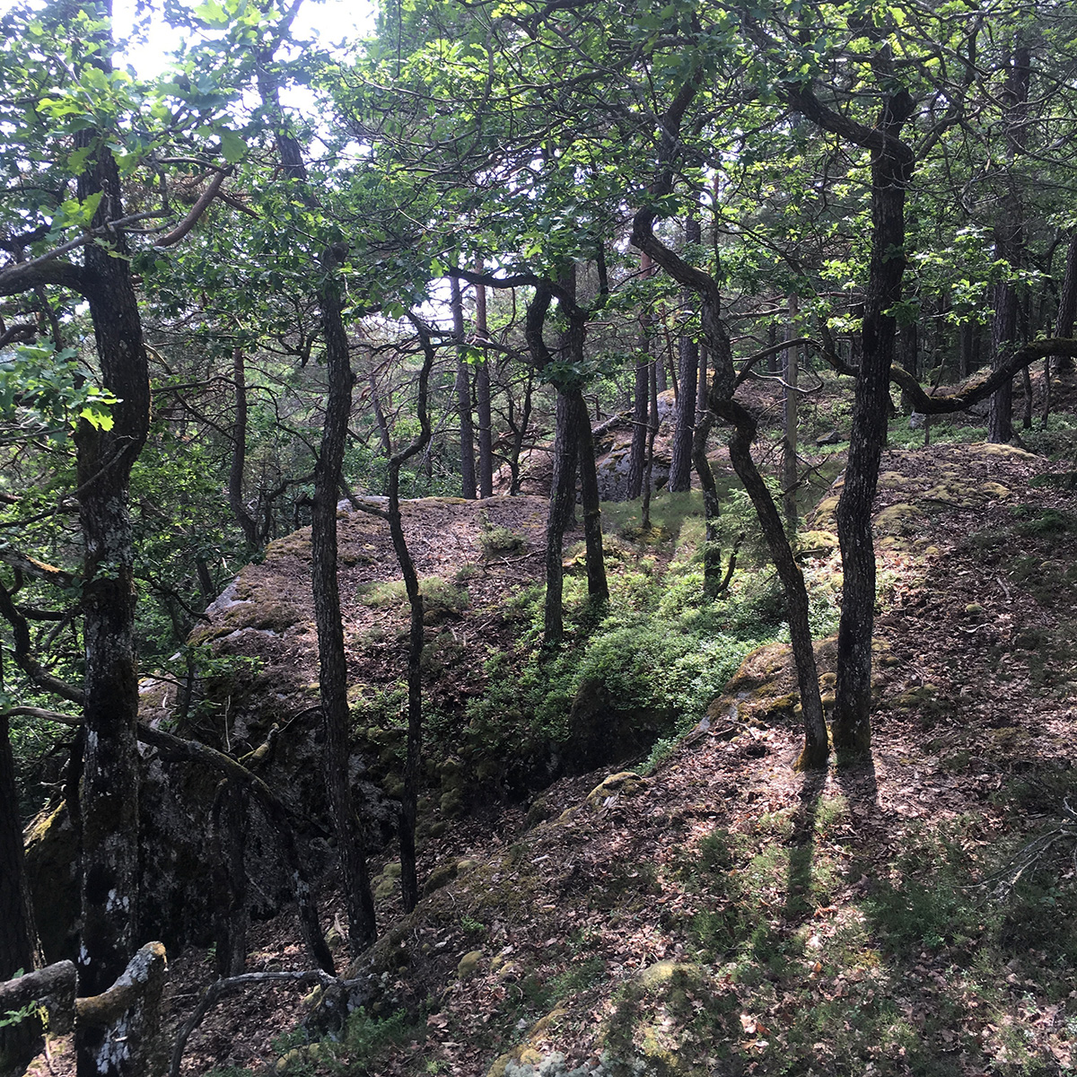 Dansande skogen