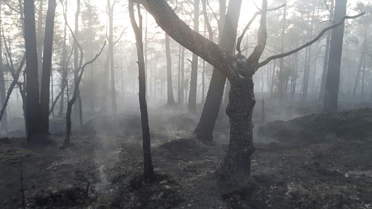 Brandområde Iglekärr