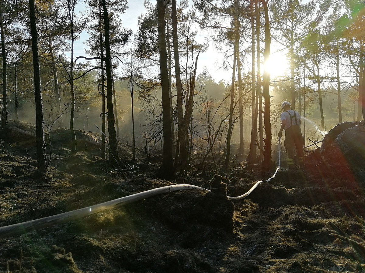 Skador på träd och mark