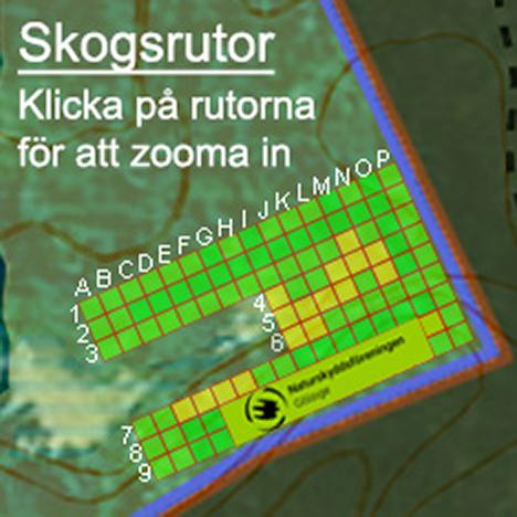 Skogsrutor i Skarnhålans gammelskog